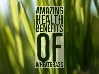Amazing Health Benefits Wheatgrass