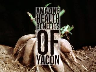 Amazing Health Benefits Yacon
