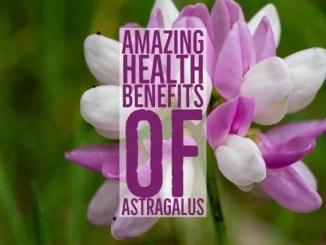 Amazing Health Benefits Astragalus