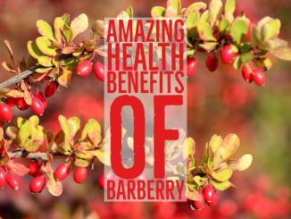 Amazing Health Benefits Barberry