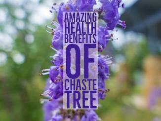 Amazing Health Benefits Chaste Tree