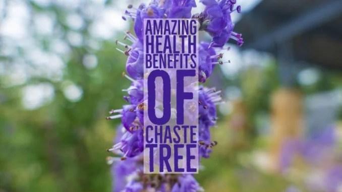 Amazing Health Benefits Chaste Tree