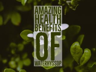 Amazing Health Benefits Waterhyssop