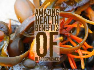 Amazing Health Benefits Bladderwrack