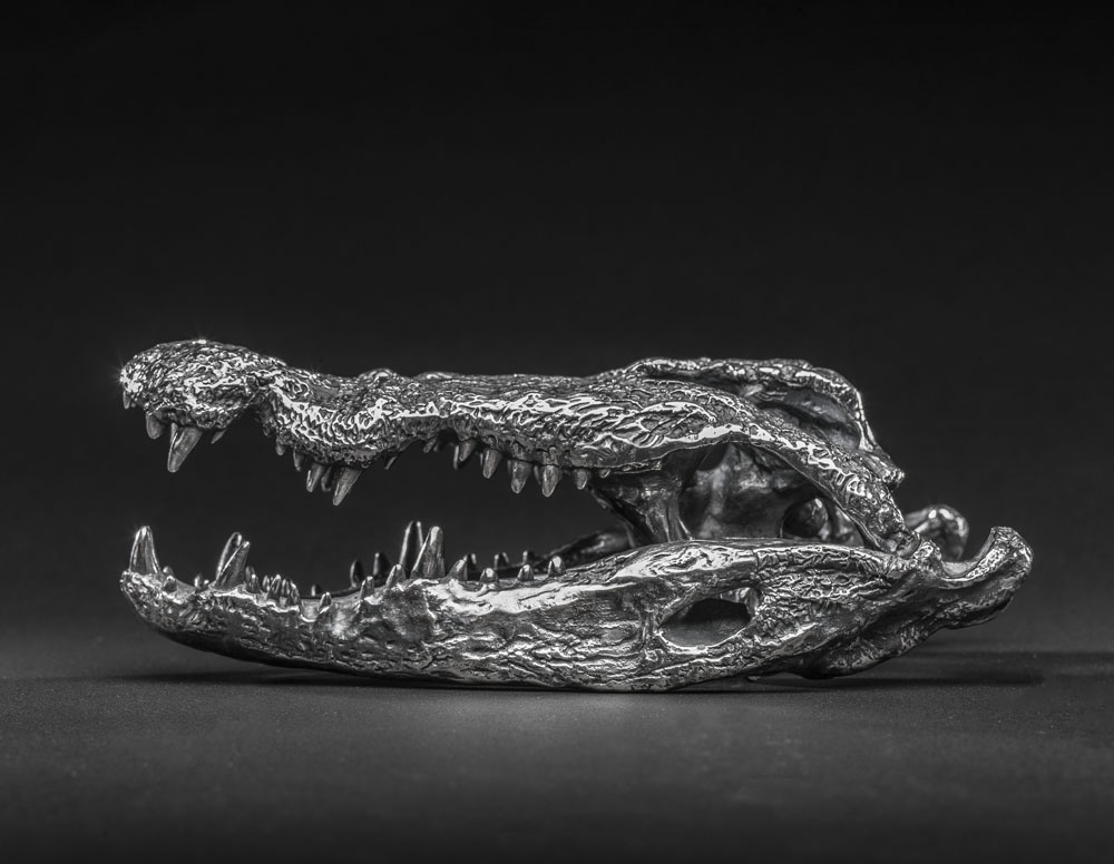 'Silver' Lake Chamo Nile Crocodile Skull 'Sculpture' by Murray Grant