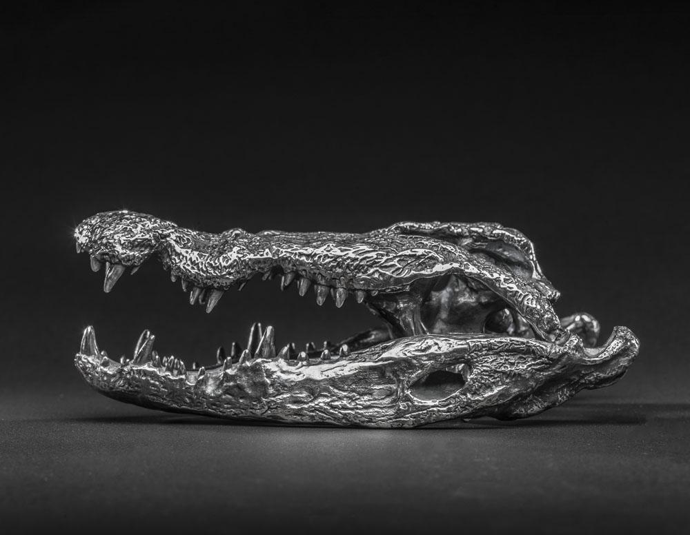 'Silver' Lake Chamo Nile Crocodile Skull 'Sculpture' by Murray Grant