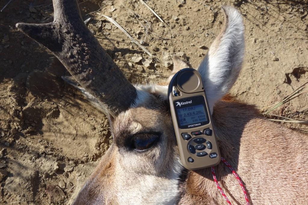 Wyoming Antelope