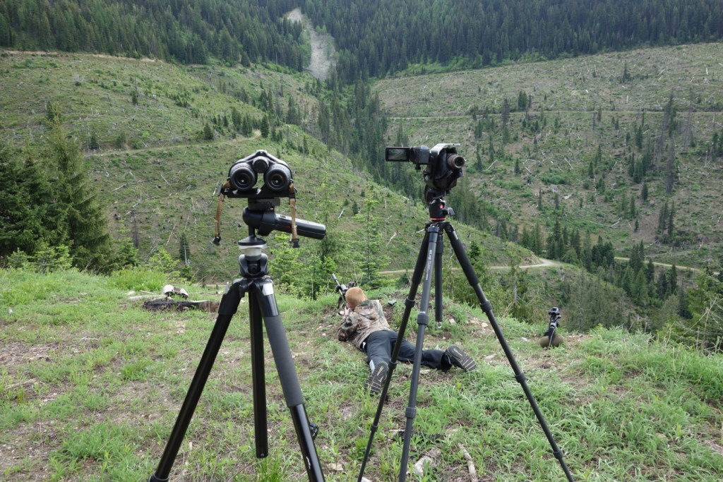 Long Range Ground Squirrel Hunting June 2017