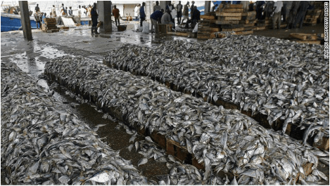 Image result for overfishing images