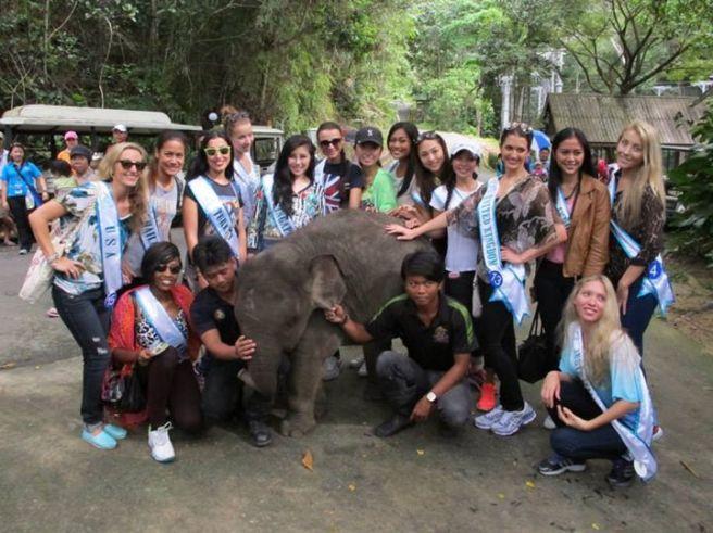 Dwarf elephant at Langkawi Wildlife Park