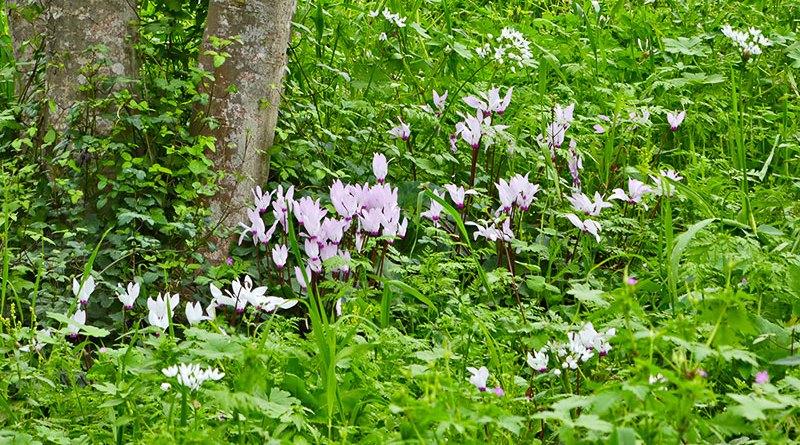 Весенний лес Кирьят Ата