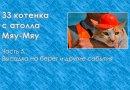 33 котенка с атолла Мяу-Мяу. Часть 5. Высадка на берег и другие события