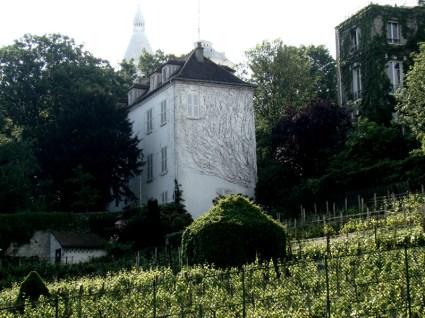 Winnica na Montmartrze- kawałek francuskiej wsi w sercu wielkiego miasta