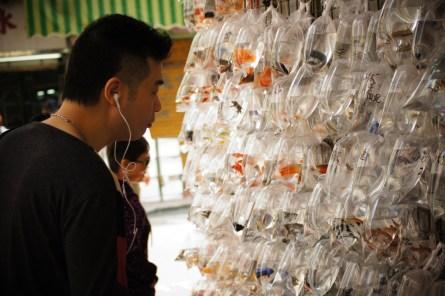 Kowloon- Fisch Market