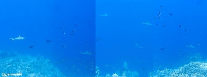 Diving Tubbataha reef, Philipines