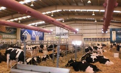 Encuentro Nacional de Ganaderos Lecheros vacas