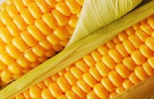 maiz amarillo