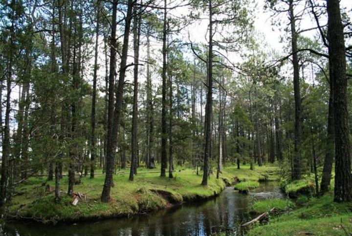 Resultado de imagen para bosques de durango