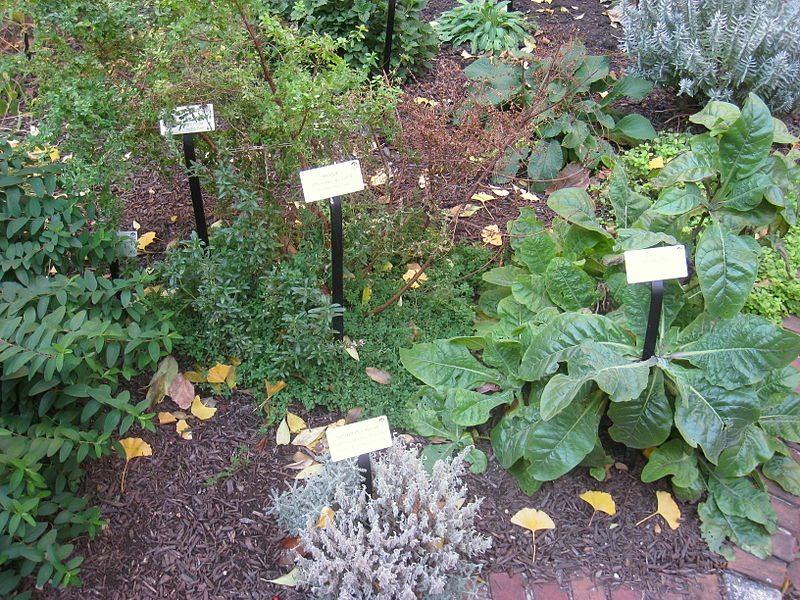 Crean jard n para la conservaci n de plantas medicinales for Jardin xochimilco