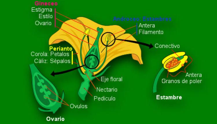 Anatomia floreal chile