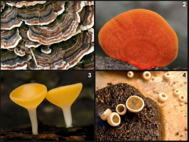 Tipos de hongos. Abre la imagen para saber más