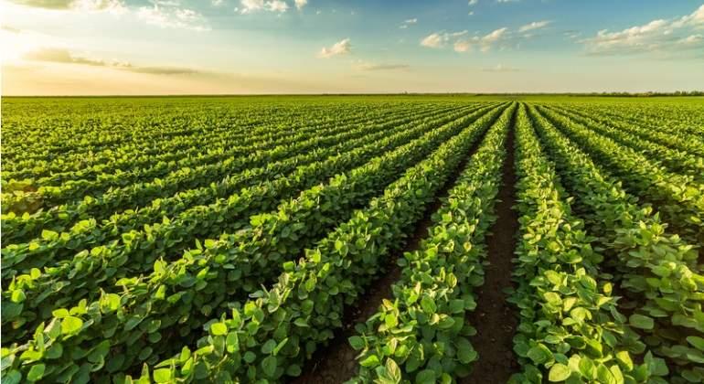 Uno de cada cuatro dólares exportados proviene de la soja, informó el Indec