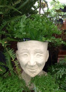 potted plant face