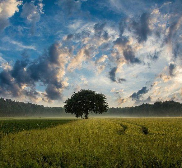 , Freiheit ist die Kunst der freien Sicht
