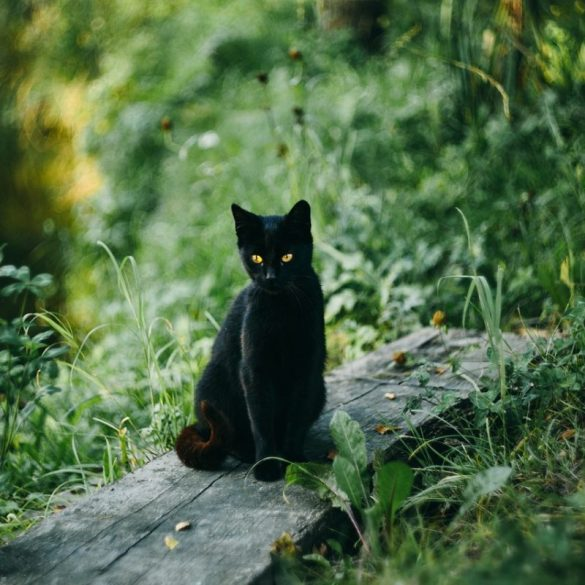 Krafttier Katze