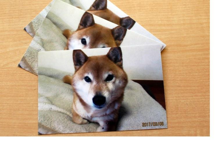 愛犬、ポストカード