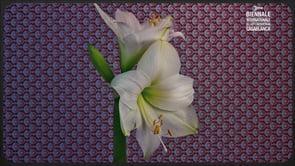 Botanica pels ulls: Flowers
