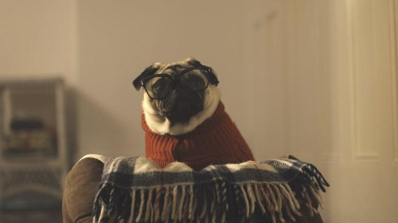 D'ulleres per gossos: A Pug's Christmas