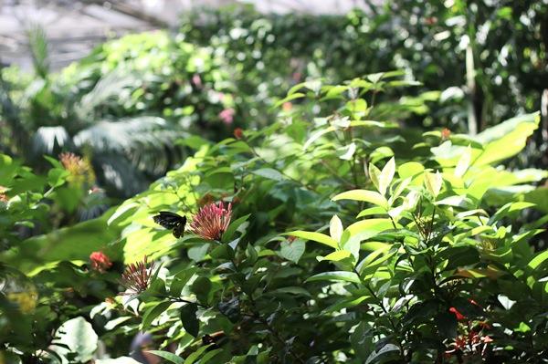 20110817 Butterfly Pavilion 10