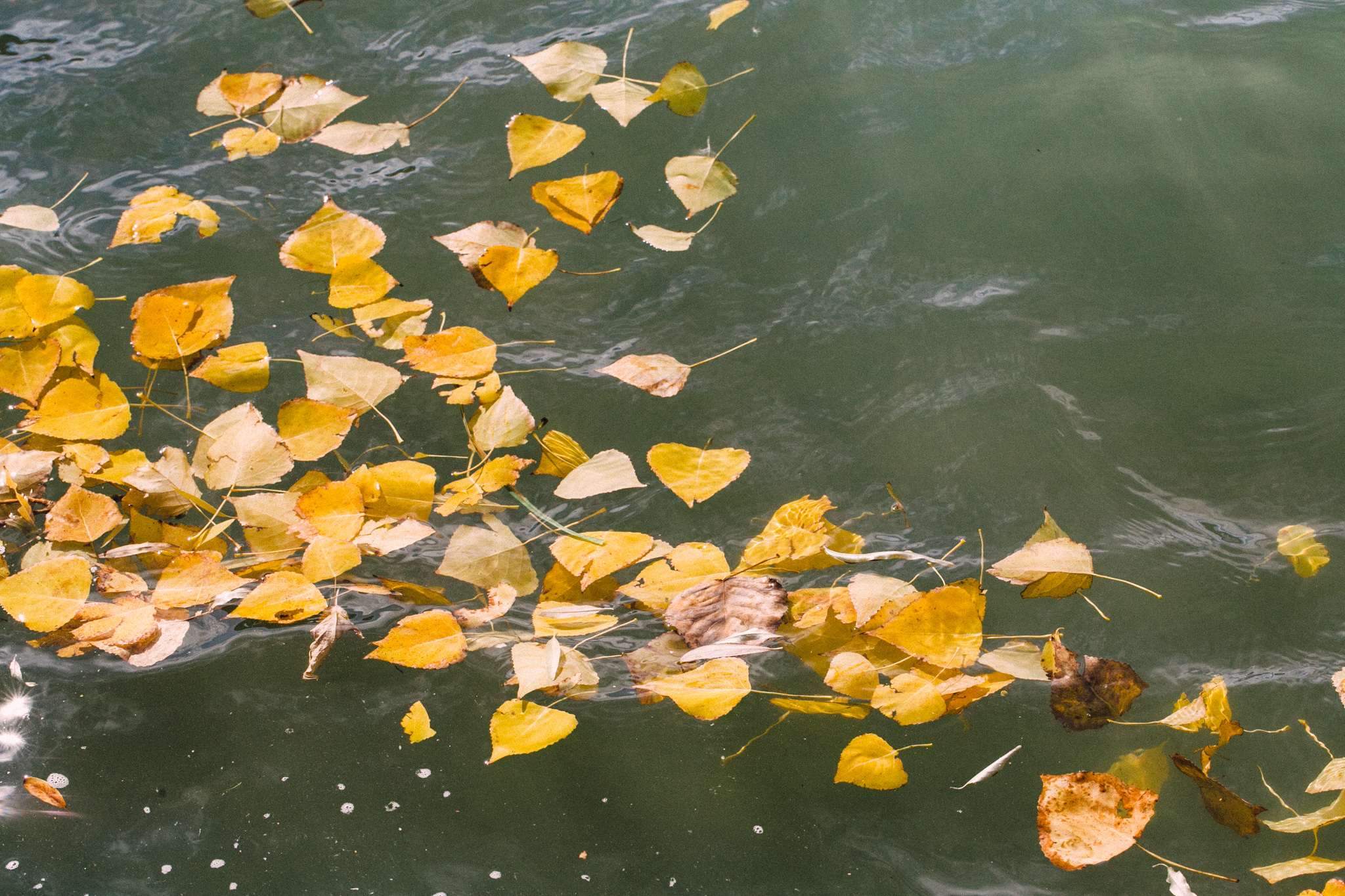 1011 coot lake-007