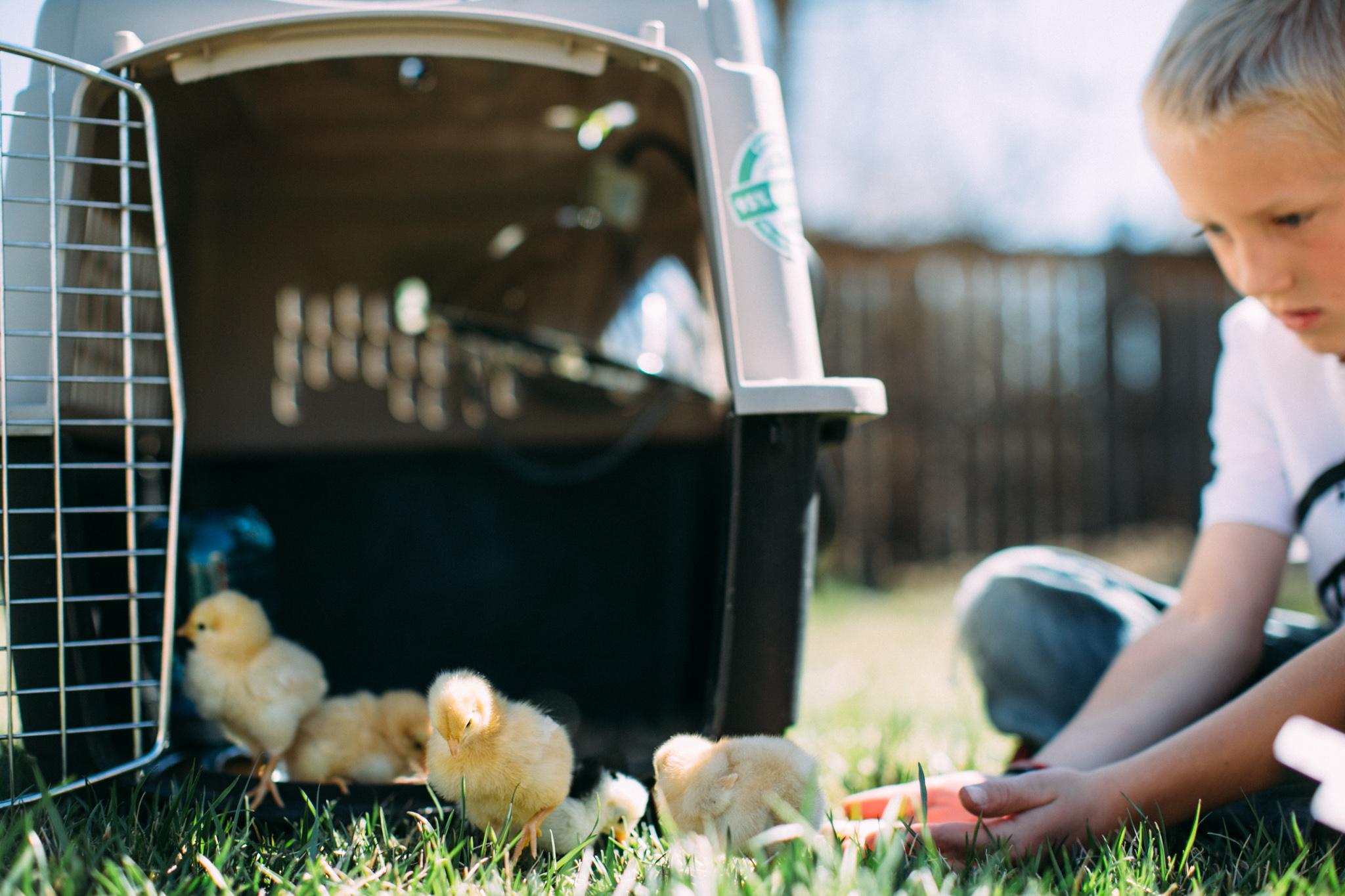0328 chicks-005