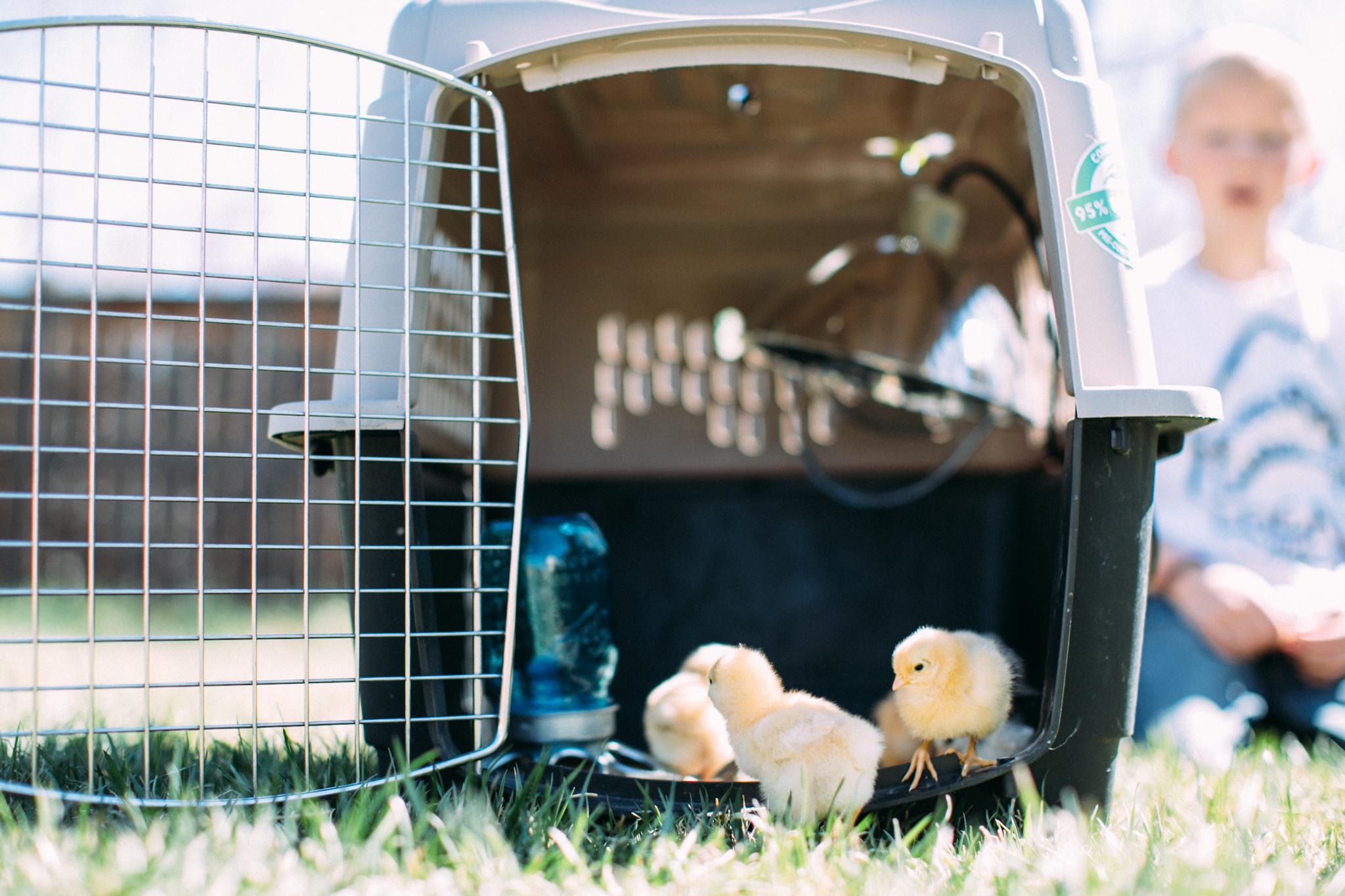 0328 chicks-010