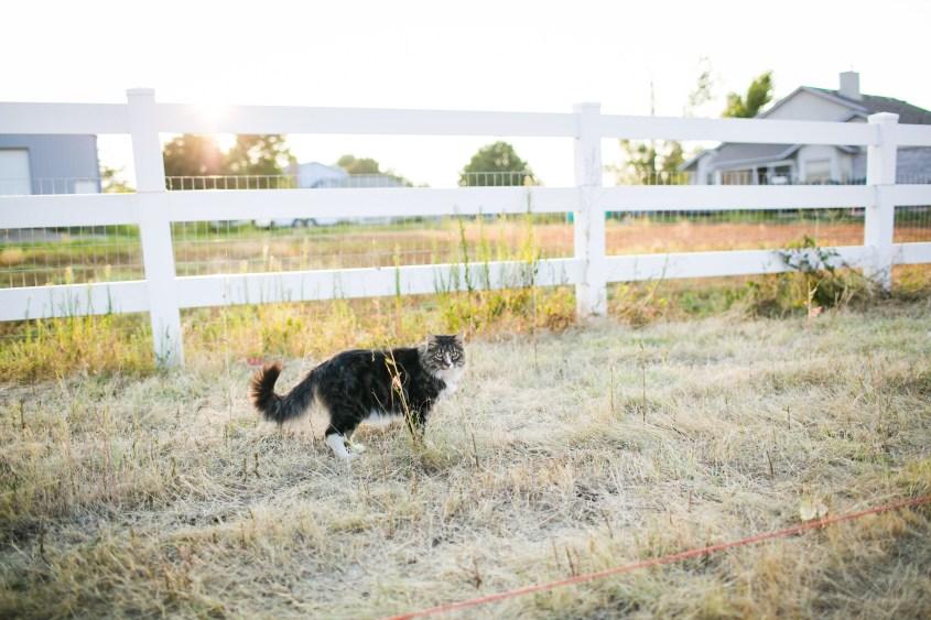 0822 fence-012