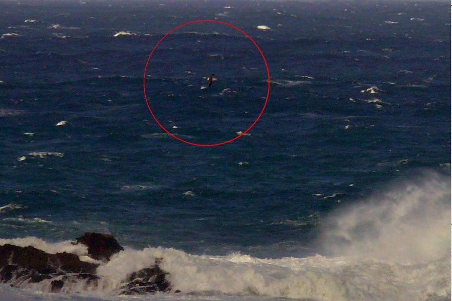 o-medo-e-libre-cormoran-f-goiriz-pantin-04-02-08.jpg