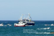 Procesión Marítima en honor de la Patrona de Cedeira - Cedeira, 16 de agosto de 2012 - fotografía por Fermín Goiriz Díaz (238)