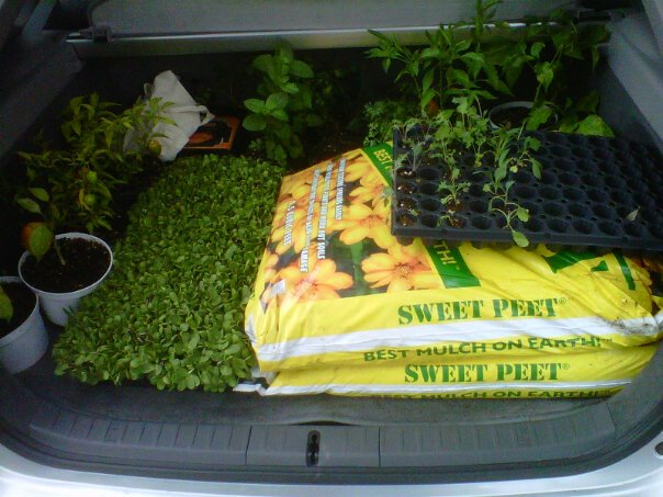 Organic soil and organic plants in Florida