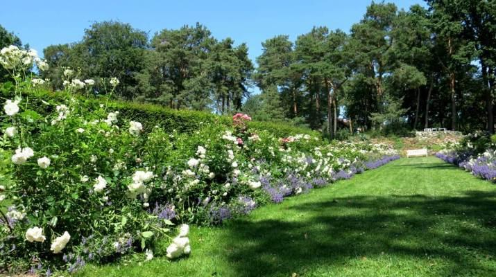 Der Rosengarten im Fraenkelgarten in Kladow