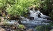 Frisches Wasser sprudelt aus der Quelle Mzima Springs