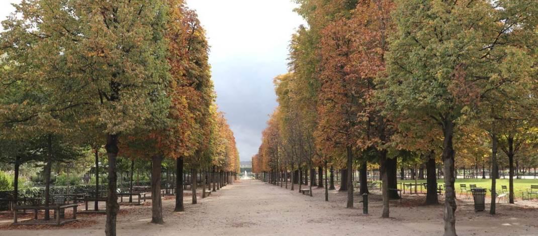 Kastanienallee in den Tuilerien