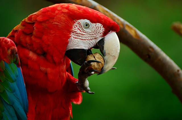 Vogelfutter Ara