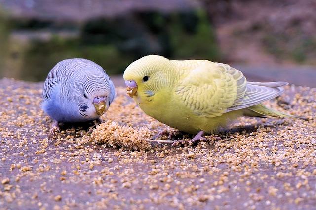 Vogelfutter Wellensittiche
