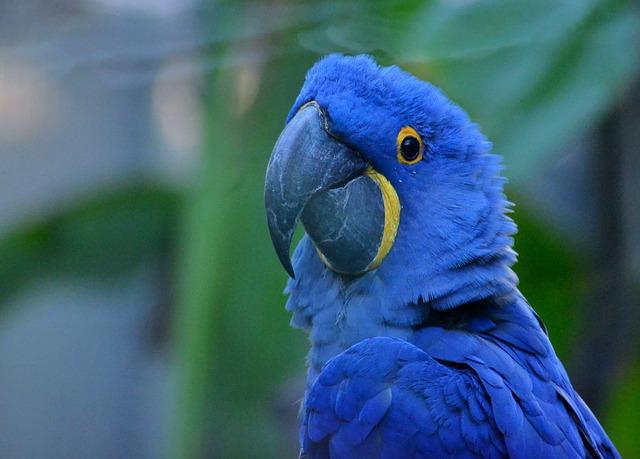 Die häufigsten Papageienkrankheiten - Ursachen & Symptome