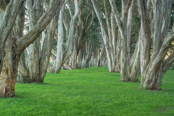 trees-340747_1280