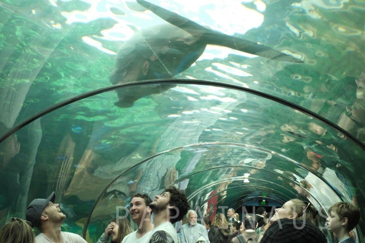 ジュゴンが見れる水族館