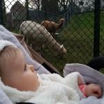 Met-Mirthe-in-het-dierenparkje