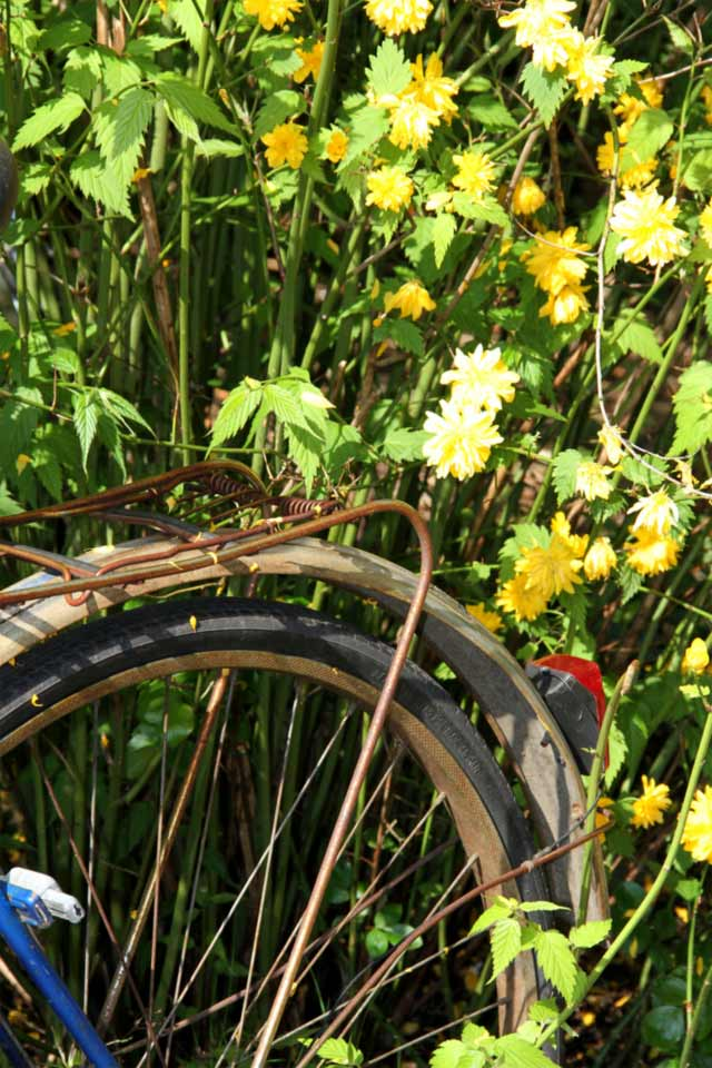Fahrrad im Busch